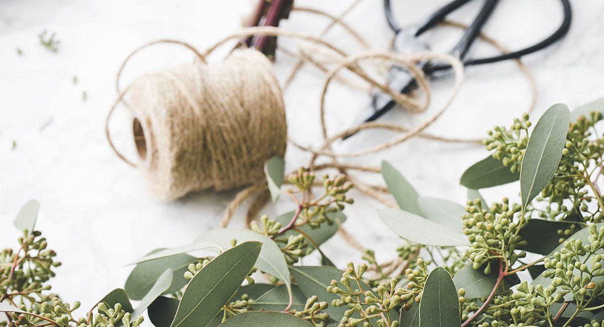Eucalyptus, détails.