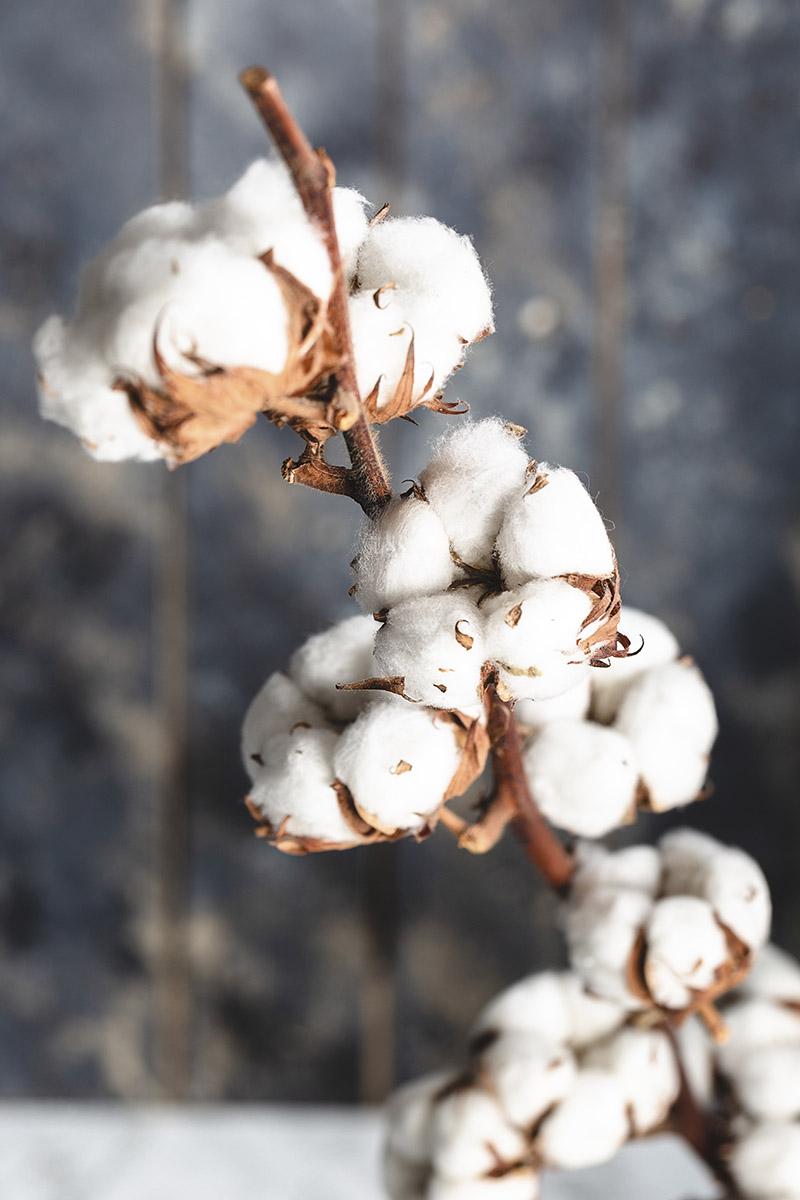 Déco fleur de coton